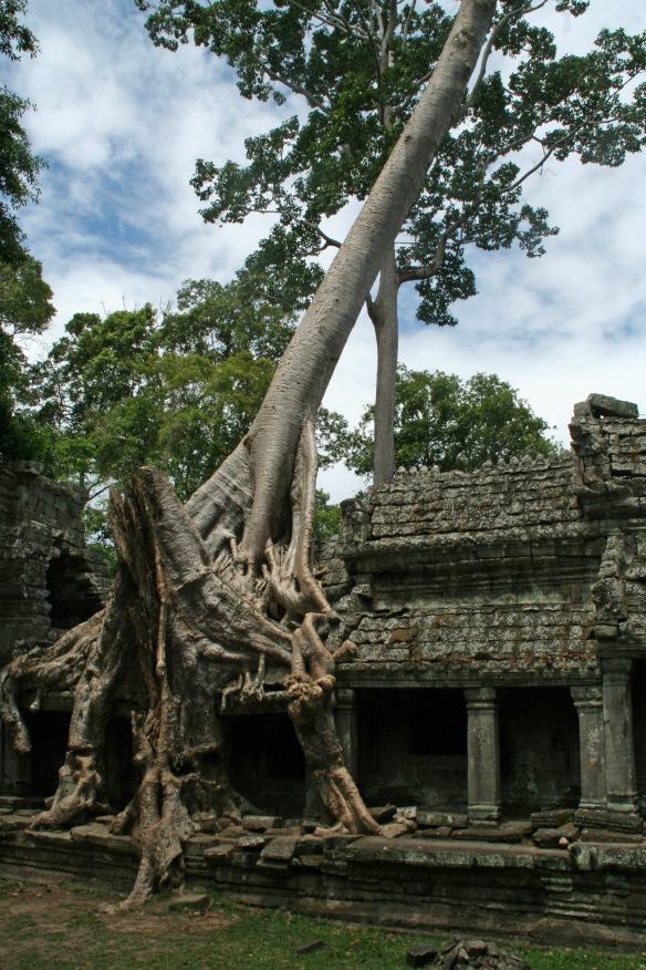 Ancient temples and trees together!? MADNESS!!