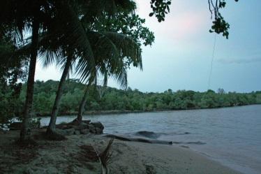 Similar trees overlooking another beach on Pulau Ubin